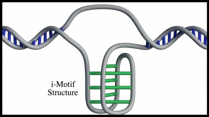 En forenklet fremstilling av knuten på DNA-tråden. (Illustrasjon: Mahdi Zeraati)