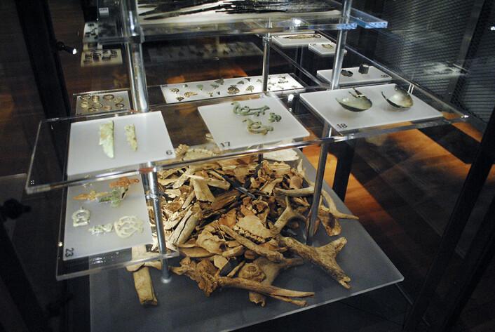 På det Historiska museet i Stockholm er dyrebein funnet på samiske offerplasser stilt ut. Disse beinene er nå analysert ved hjelp av nye metoder, og forskerne har funnet oppsiktsvekkende svar om hvilke dyr som ble ofret – når. (Foto: Marte Spangen)