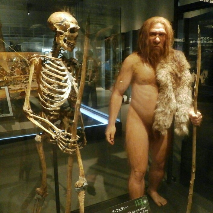 Rekonstruert neandertal-skjellet og en neandertaler, slik de kan ha sett ut. Disse hadde også store øyebrynsbroer. (Foto: Photaro/CC BY-SA 3.0)
