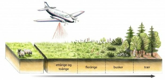 Typisk utvikling på jordbruksareal som ikkje lenger er i bruk. (Illustrasjon: Ulrike Bayr)