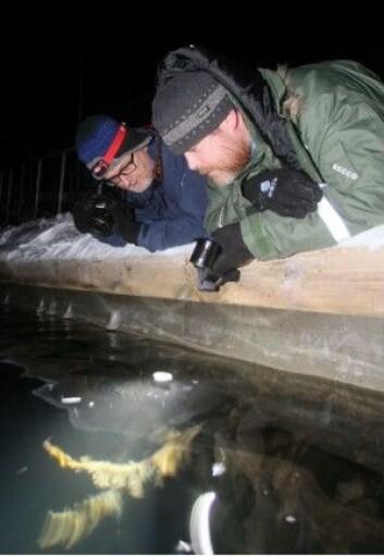Professorene Jørgen Berge og Geir Johnsen forsker på marine økosystem. (Foto: Ole M. Rapp)