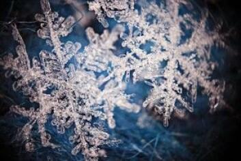 Humusmolekyler er som snøkrystaller, komplekse og ingen er helt like. Til forskjell fra snøkrystaller, inneholder humusmolekylene omtrent 50 prosent karbon. (Foto: Shutterstock / NTB scanpix)