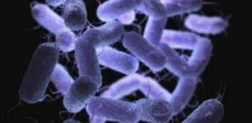 Yersinia-bakterier er blant det Dirk Linke forsker på. De fester seg til cellene våre med et spesialdesignet redskap og gir alvorlig sykdom. (Foto: Colourbox)