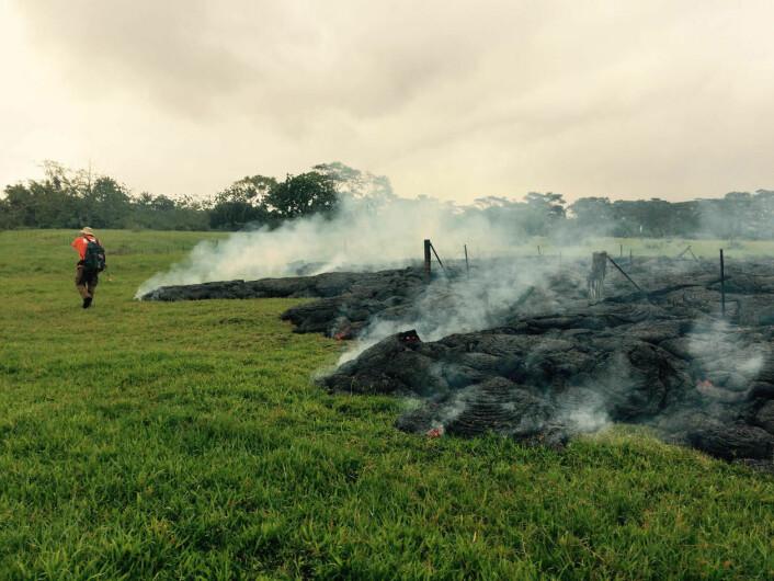 Ein geolog frå USGS gjer undersøkingar ved lavastraumen, vest for landsbyen Pahoa. Bildet er tatt 26. oktober 2014. (Foto: U.S. Geological Survey, Hawaiian Volcano Observatory)