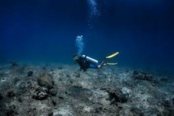 Slik ser et dødt korallrev ut. (Foto: Dudarev Mikhail / Shutterstock / NTB scanpix)