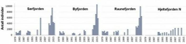 Variasjon i bunnfaunaens individtetthet (antall individer per kvadratmeter) (dybde 224-333 m) fra ulike fjorder rundt Bergen i årene fra 1979 til 2016. Tre av fjordene (Sørfjorden, Byfjorden, Raunefjorden) representerer terskelfjorder som er påvirket av menneskelig aktivitet (havbruk, kommunale avløp). Hjeltefjorden representerer et område med relativ høy vannutskifting. Den største endringen i antall individer etter år 2000 skyldes hovedsakelig økt dominans av hardføre børstemarker. (Figur: Uni ResearcH)