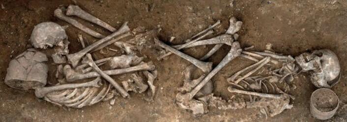 Dette gravfunnet er fra Trumpington i England. To mennesker er begravet med krukker som tilhørte klokkebegerkulturen. (Foto: Dave Webb, Cambridge Archaeological Unit)