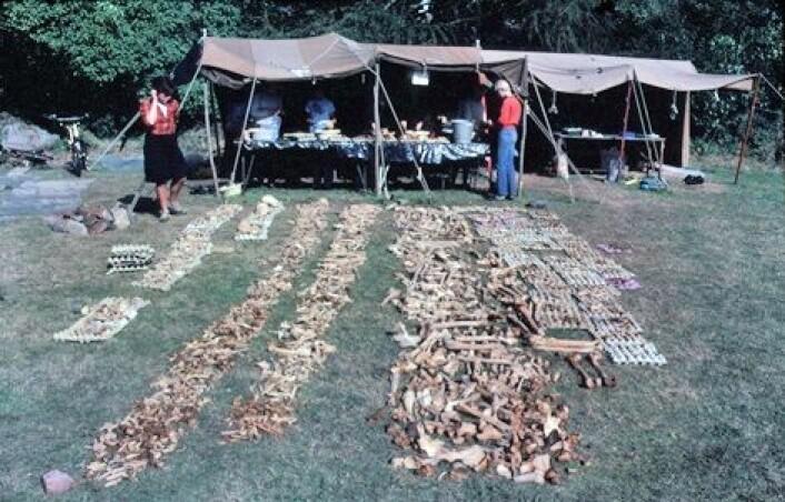 Alle knoklene fra massegraven i Repton. (Foto: Martin Biddle©)
