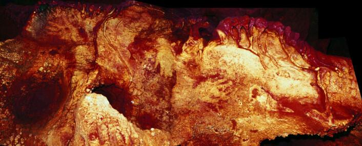 Her kan du se håndstensiler i en av de spanske hulene. En av disse stensilene er datert til å være rundt 66 000 år gammel, innenfor neandertal-tid. (Foto: H. Collado)