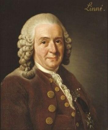 Carl von Linné ønsket at Uppsala hadde en erkebiskop som tenkte likt som Gunnerus gjorde. (Bilde: Alexander Roslin/Nationalmuseum, Sverige)