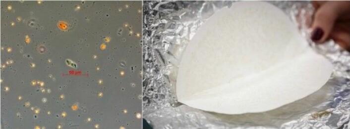 Tørka partiklar frå sjøvatn dekker filteret: Plankton, andre organiske partiklar og uorganiske partiklar. Filteret er laga av energilaust glasfiber som smelter når prøven brenn. (Foto: Tore Strohmeier / Erlend A. Lorentzen)
