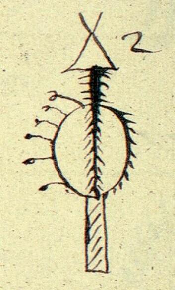 Gand-flue tegnet bak på ei runebomme fra Rødøy (Helgeland). Dikterpresten Petter Dass (1647–1707) kom til å fortelle om gand som fluer, som han kalte «Belzebubs fluer» (djevelens fluer). Johan Randulf (1686–1735) forteller om gandfluer omtrent slik i Nærøymanuskriptet (1723): Ikke alle finner har disse fluene, men kun de sterkeste og mest lærde noaider. Når de runer etter dem … åpenbares i luften en stor fugl på størrelse med en hønse-hauk eller falk. Denne spyr ut til dem disse gand-fluer av sitt nebb, og noen rister de ut fra sine fjær og vinger. Det er uten tvil naturlige, men forgiftede fluer, som denne Satan i sin fugle-ham har sanket fra et annet sted i verden, til Finnenes onde tjeneste. Fluene samler finnen opp og legger i en eske, for siden å sende dem ut som gand. (Illustrasjon: XA Qv. 23, NTNU UB)