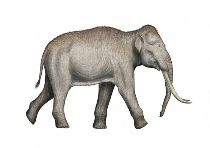 En rekonstruksjon av hvordan denne arten kan ha sett ut. (Bilde: DFoidl/CC BY 3.0)