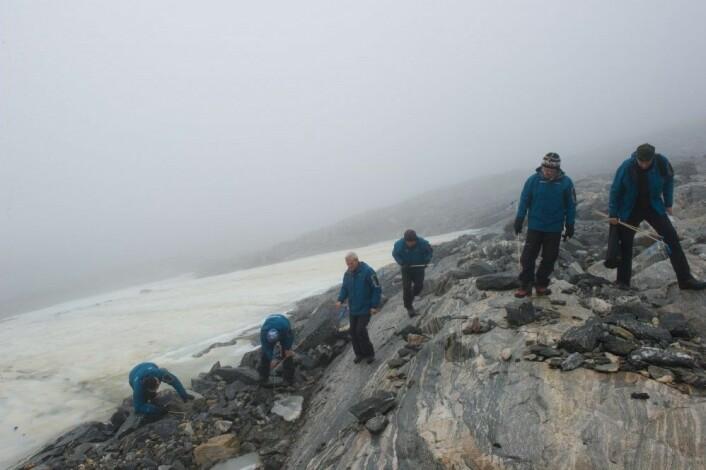 Feltarbeid og leting etter utsmeltede gjenstander ved Lendbreen i Oppland. Områdene inntil den smeltende isen blir systematisk registrert. (Foto: Johan Wildhagen, Palookaville)