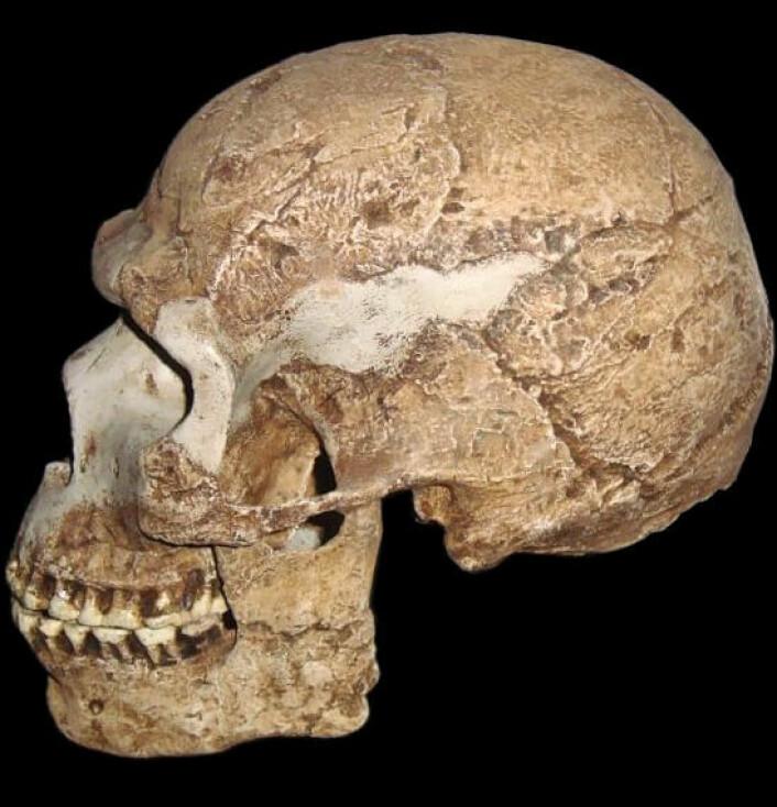 Dette er en rekonstruert hodeskalle fra en annen tidlig Homo sapiens som har blitt funnet i Israel. Denne skallen er rundt 100 000 år gammel, og den viser en blanding mellom moderne og gamle trekk, men dette er Homo sapiens. (bilde: Wapondaponda/CC BY-SA 3.0)