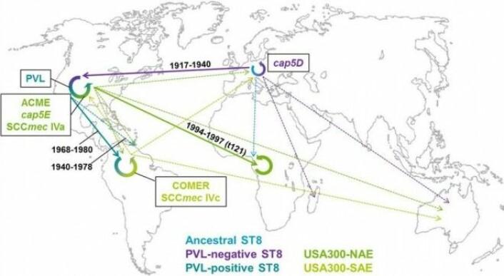Kart over spredningen av USA300. Vi kan også se hvor og når den har plukket opp gener for resistens og økt virulens. (Illustrasjon: PNAS)