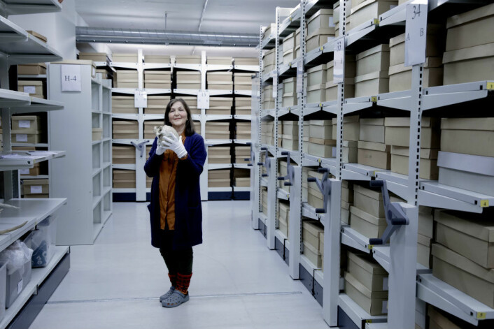 Anne Karin Hufthammer, arkeolog og førsteamanuensis ved Avdeling for naturhistorie, Universitetsmuseet i Bergen. (Foto: Paul S. Amundsen)