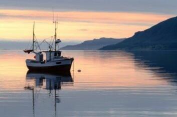 Matfisk utgjør en milliardindustri for dansk fiskeri i Nordsjøen. Kvotene blir fastsatt etter hvor stor bestanden av artene anslås å være. (Foto: Robert Neumann / Shutterstock / NTB scanpix)