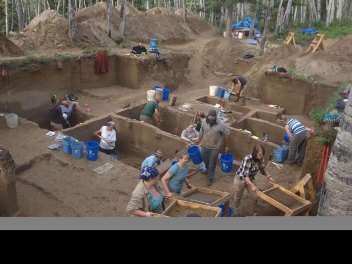 Utgravningene i Alaska i 2013. (Bilde: Ben Potter)
