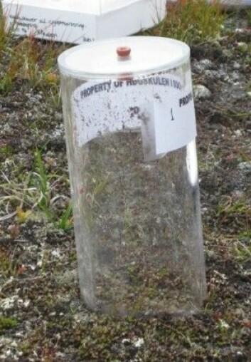 Disse plastkamrene brukte forskerne for å måle mengden med metan rundt Styggedalsbreen. (Foto: Alejandro Mateos-Rivera)