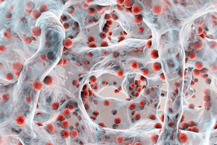 Når bakterier klumper seg sammen og danner biofilm blir de mer motstandsdyktige, både gode og skadelige bakterier i kroppen gjør dette. [Illustrasjon: Kateryna Kon / Shutterstock / NTB scanpix].