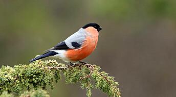 - Slutt å mate fuglene etter påske