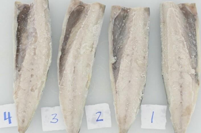 Her er fire filetar før tining. (Foto: Nofima)