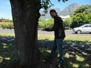 Her gjør professor Pretzsch målinger av et tre i Cape Town. [Foto: TUM]