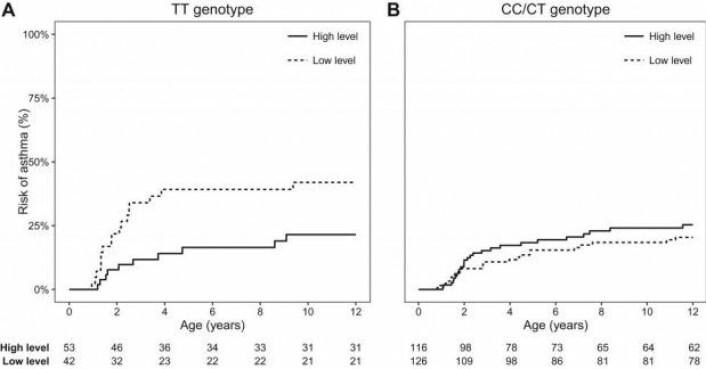 Forskjellen på utviklingen av astma i gruppen med en spesiell genvariant (TT, tv.) i forhold til andre barn. Den fullt opptrukne streken viser småbarn med høye nivåer av katteallergener i hjemmet. (Figur: COPSAC/Journal of Allergy and Clinical Immunology)