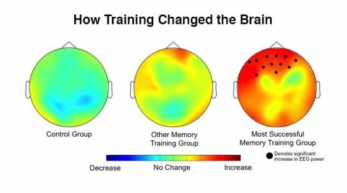 Illustrasjonen viser, ifølge forskerne, den økte aktiviteten i prefrontal cortex hos de som hadde øvd på <em>Dual N-back</em>-øvelsen sammenlignet med de andre forsøksgruppene. [Illustrasjon: Kara J. Blacker/JHU]