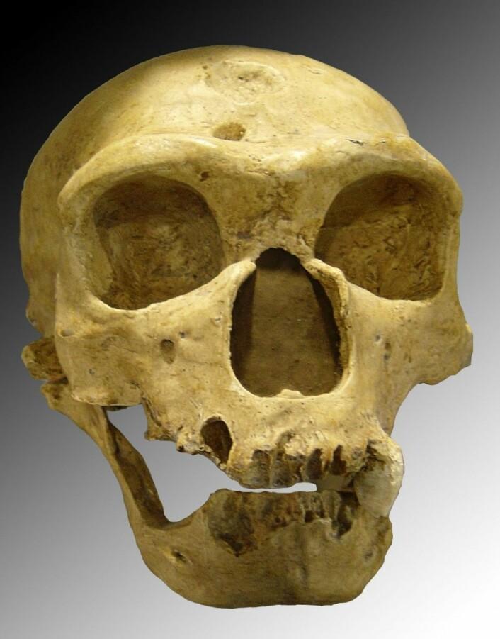 En av skallene som ble brukt til å beregne hvordan nesen til neandertalerne fungerte. Denne ble funnet i Frankrike for over 100 år siden, og personen skal ha levd for 60 000 år siden. (Foto: Luna04/CC BY 2.5)