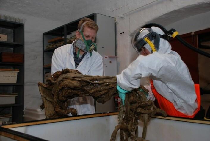Karet med kjempeblekkspruter ble åpnet for registrering og skifte av sprit i 2011. (Arkivfoto: Per Gätzschmann, NTNU Vitenskapsmuseet)