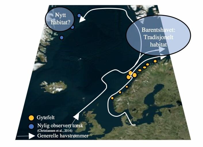 År om anna driv det torskelavar og yngel frå Norskekysten til Nordaust-Grønland. Kjersti Opstad Strand og kollegene hennar har brukt straummodellar som likner kjente vêrmodellar når dei har rekna seg fram til kor ofte det driv torskelarvar og -yngel frå Lofoten og til Nordaust-Grønland – og kor mykje som endar opp der. Forskarar får UiT Norges arktiske universitet har funne vaksen torsk ved Nordaust-Grønland, men det er ikkje dokumentert kor han kjem frå. (Kart: Kjersti Opstad Strand / Havforskingsinstituttet)