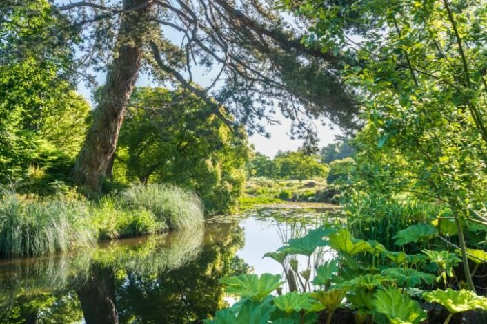 Over 8000 arter lever her i den botaniske hagen ved Universitetet i Cambridge. (Foto: Cambridge University Botanic Garden)