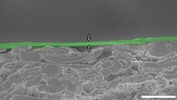 Tverrsnitt av prøve. Viser et cirka to nanometer tykt lag med nanocellulose oppå papp. (Foto: NTNU)