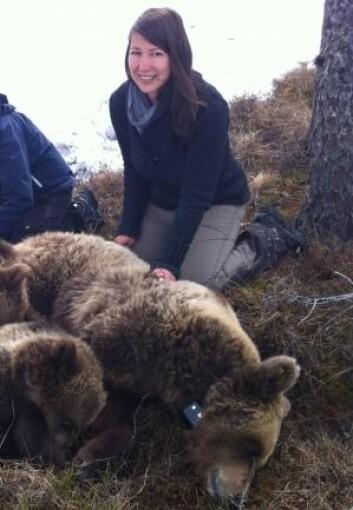 Anne Gabriela Hertel har forsket på hva skandinaviske brunbjørner spiser og hvordan de blir påvirket av jakt. (Foto: privat)