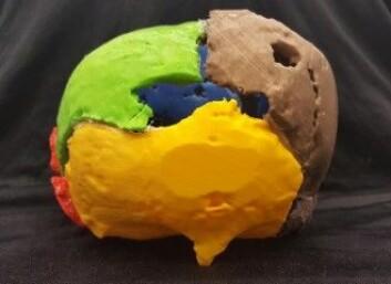 Et 3D-print av Gorms kranium sett bakfra. (Foto: Marie Louise Jørkov)