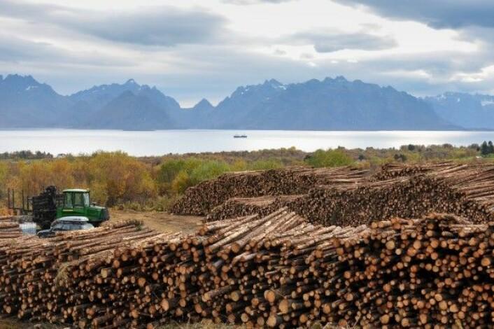 Skogavvirkningen har variert mellom 7 og 12 millioner kubikkmeter per år de siste 90 år. Her fra Stokmarknes i Hadsel kommune i Nordland. (Foto: Leif Kjøstelsen/NIBIO)