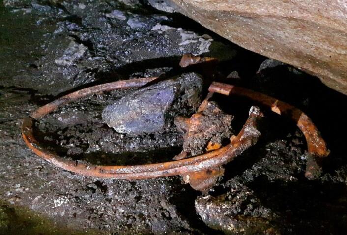 En ansamling av svært godt bevarte bjørnebein. (Foto: Jørgen Rosvold, NTNU)