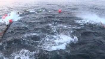 Slik så det ut da M/S Hillersøy tok hele den norske makrellstørjekvota i ei not i 2016. (Foto: Øyvind Tangen / Havforskningsinstituttet)