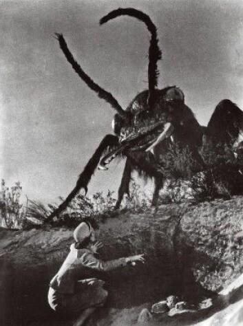 Mutantmaurene i filmen «Them!» fra 1954 var betydelig større og mer skremmende enn dem forskerne har skapt i amerikanske laboratorium. (Foto: Warner Brothers)