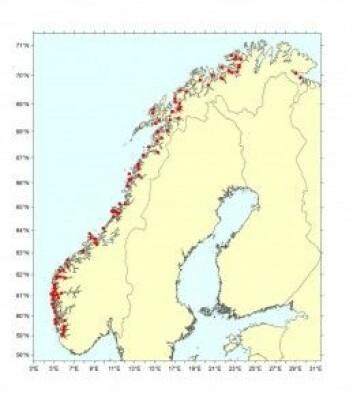 Prøvene kjem frå 100 oppdrettsanlegg frå heile kysten. (Bilde: Havforskingsinstituttet)