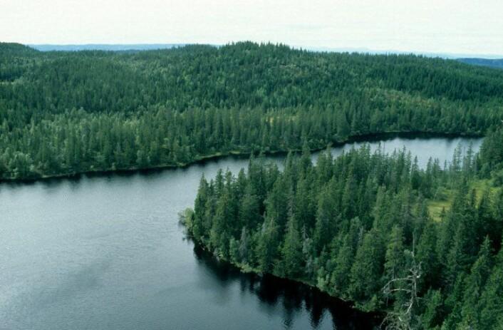 Det er et krav om å tilrettelegge for fleretasjet skog i kantsoner mot vann, vassdrag og myr. (Foto: John Yngvar Larsson)