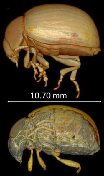 Her kan du se coloradobilla både inni og fra utsiden. (Foto: Danny Poinapen/Western University, Canada)