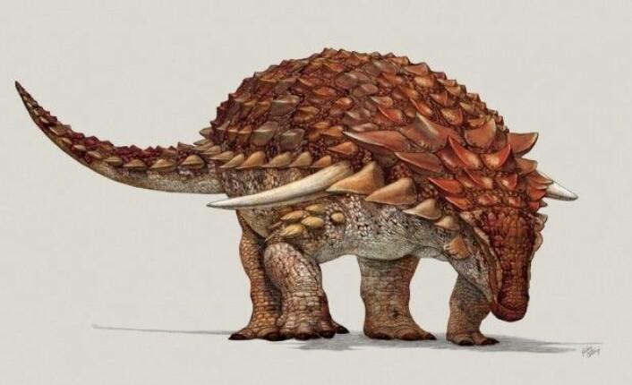 Slik mener forskerne at <em>Borealopelta markmitchelli </em>så ut da den var i live. Motskyggen vitner om at den tross størrelsen og panseret hadde fiender. – Det illustrerer hvor farlige krittidens rovdyr må ha vært, uttaler hovedforfatteren for den nye studien, Caleb Brown. (Illustrasjon: Royal Tyrrell Museum of Palaeontology)