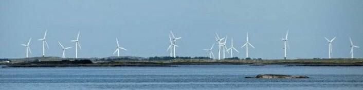 Vindmøllene på Smøla har i snitt slått i hjel én havørn for hver tiende turbin hvert år. (Foto: Georg Mathisen)