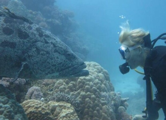 Medforfattar Bridie Allan frå Havforskingsinstituttet blir studert av ein fisk under eit dykk. (Foto: Ryan A Ramasamy)