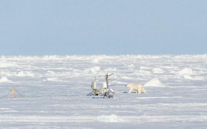 Varmeperiodene på vinteren har økt fra fire til ti siden 1980, og disse periodene varer i gjennomsnitt 12 timer lengre, viser Grahams forskning. (Foto: Fred Lamo / Norsk Polarinstitutt)