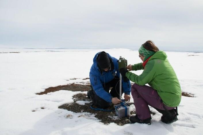Forskere fra UiT setter ut lyttestasjoner som skal registrere spillet til rypestegger som hevder revir om våren. (Foto: John-André Henden)