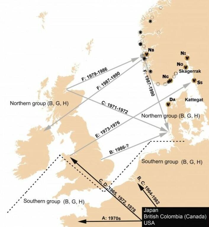 På kryss og tvers: Oversikt over innsamlingssteder og en forenklet introduksjonshistorie av Stillehavsøstersen til nordlige farvann. De seks prøvetakingsstedene som brukes i denne studien, er indikert av østersymbolet. (Figur: Fra publikasjonen)